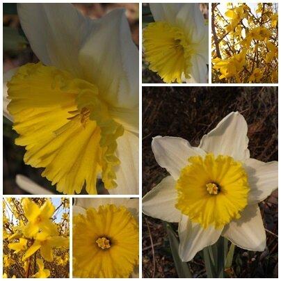 Jardin 14 mars 2014 (5)