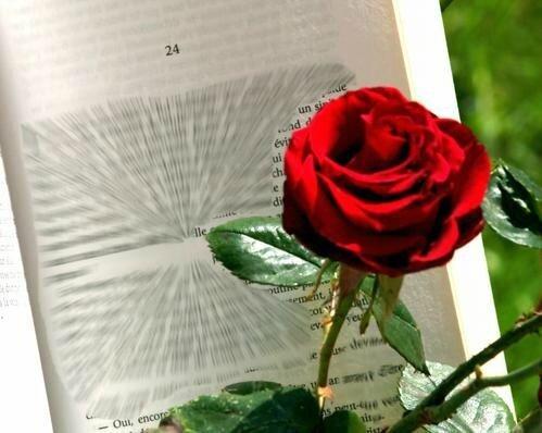 une_rose_un_livre_pour_la_sant_jordi__photo_jlm_7447_