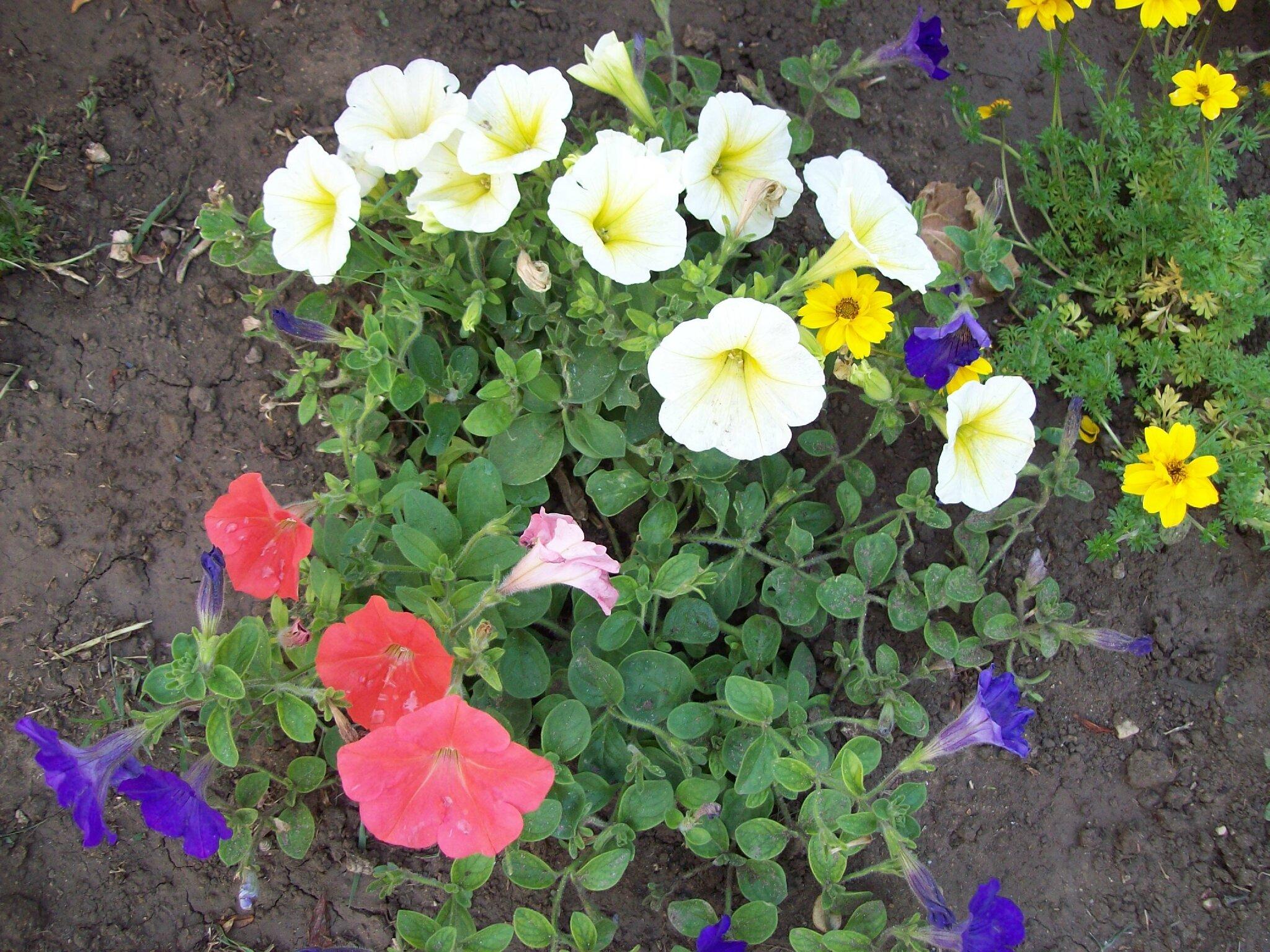 Bouquet du week end