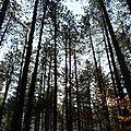 Promenons nous dans le bois...
