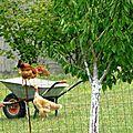 Poule au pot façon mammé