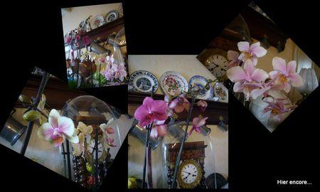 orchid_es2