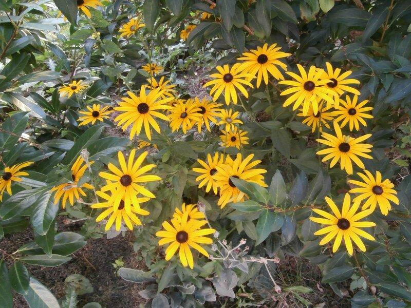 Une fleur d 39 t et d 39 automne instants de vie 54 - Fleurs vivaces d automne ...