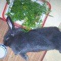 Non, ce n'est pas un lapin mort !!!!