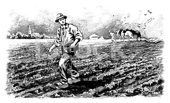 L'agriculture dans le Var
