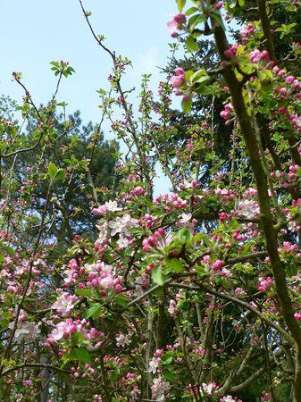 printemps_051