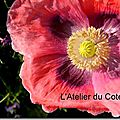 WindowsLiveWriter/couleurs_CAEB/DSCN9352_thumb