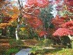 2006_11_25_Kyoto_Koyo__41__rs