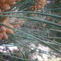 3-Toile d'araignée couverte de pollen