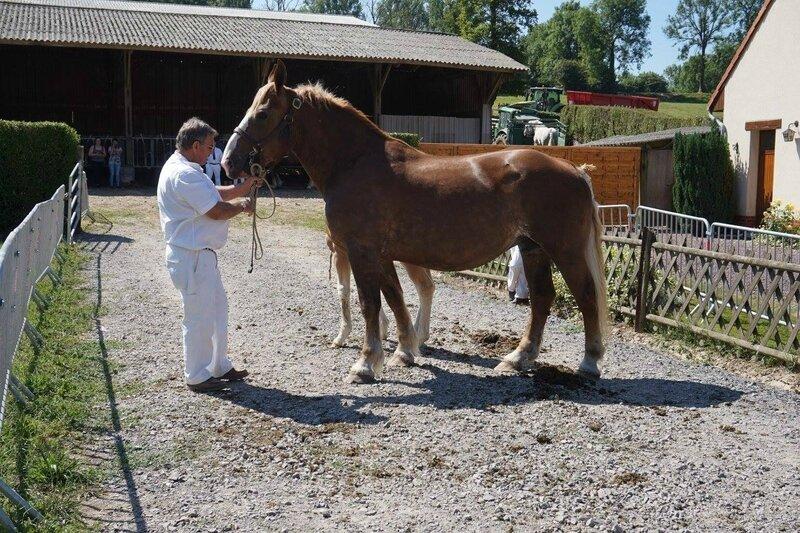 Tornade 25 - 18 Juin 2017 - Concours élevage local - Hucqueliers (62) - 3e (Suitées)