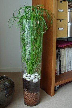 une plante verte facile vivre mon billet d 39 humeur en couleurs. Black Bedroom Furniture Sets. Home Design Ideas