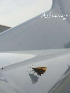 blog_avion