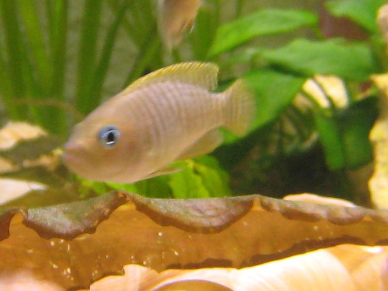 aquarium et