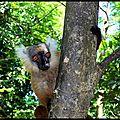 Fin Madagascar 306