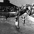jayne_bikini_leopard-1956-12-15-las_vegas-with_mickey-1-4