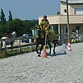 Jeux équestres manchots 2013 (198)