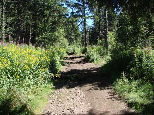 2008 08 21 Le chemin pour monter au sommet du Mont Mézenc