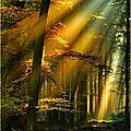 arbre foret461_n