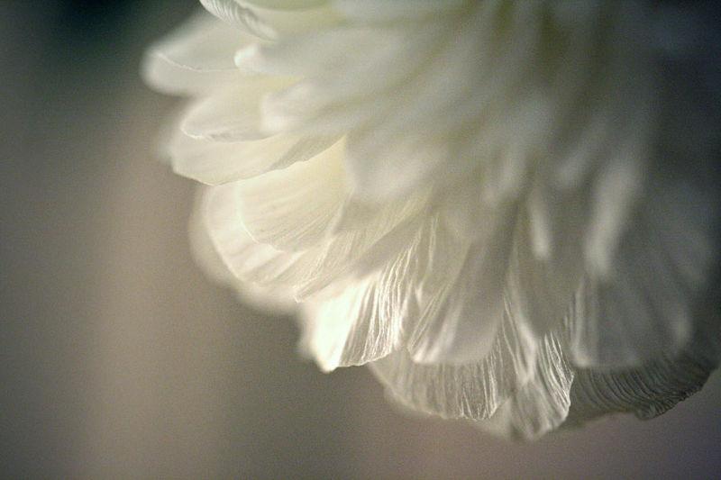vegetalwing