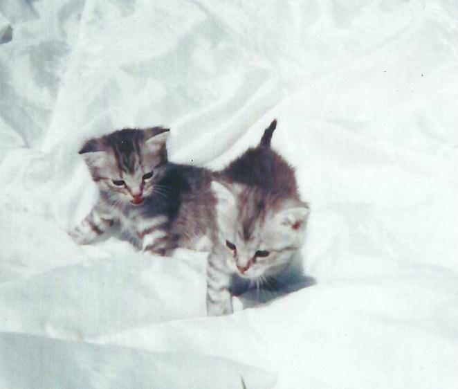petits chatons trop mignons