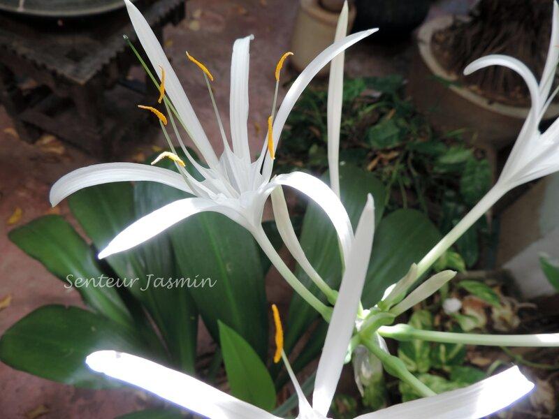 DSCN7100 fleur