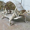 L'expo autour de kiki, la tortue géante