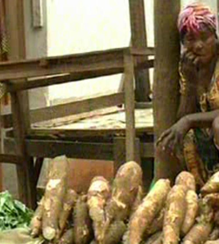 Cameroun: les agro-industries volent au secours de la filière manioc