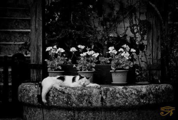 une vrai vie de chat