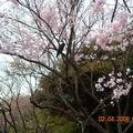 Voyage au Japon-Tokyo-Kyoto-Nara-Hiroshima-Osaka