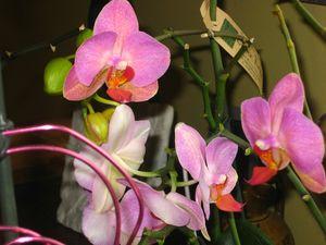 orchidées_1033