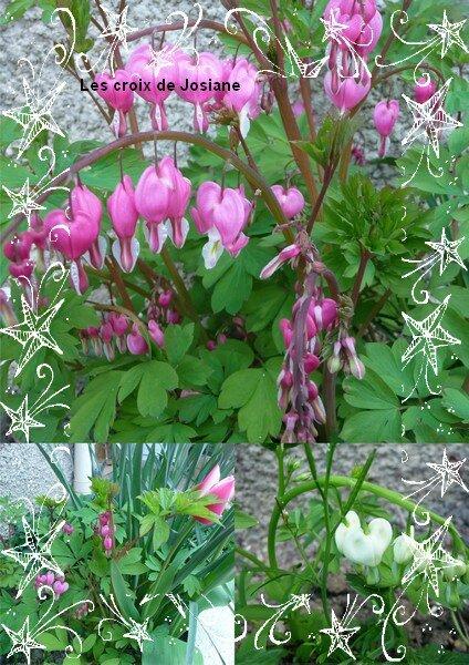 145 - Quelques fleurs 2