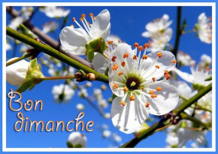 bon_dimanche_1