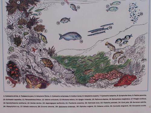 faune marine de Minorque