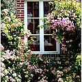 Veules les roses ( suite ) fleurs et feuillages
