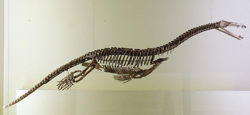 Skeleton_Nothosauria_naturkundemuseum_Berlin