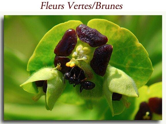 Vertes-Brunes