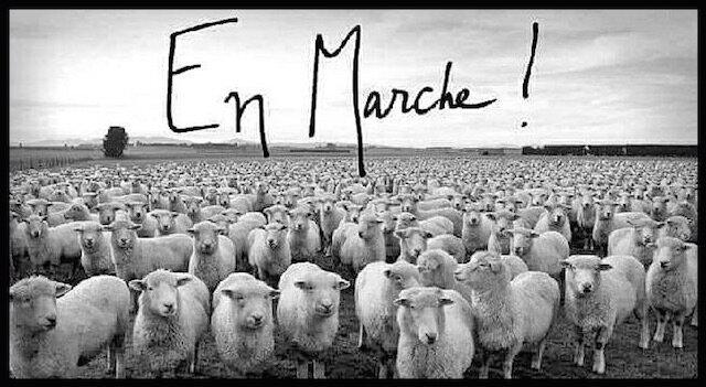 en marche les moutons
