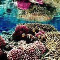 Un écueil dans les récifs