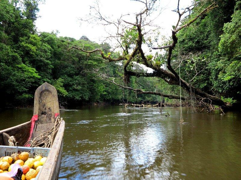 Camp Canopée Pirogue en route
