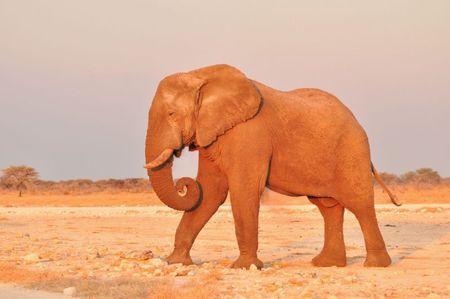 Namibie (232)