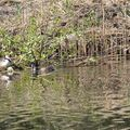 canal_grebe4