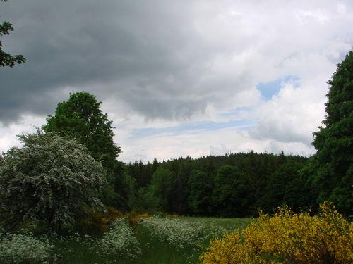 2008 06 03 Chemin bien fleurie