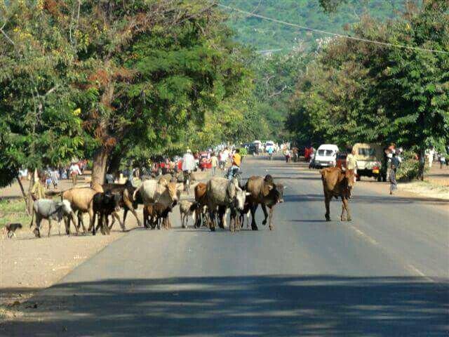 Sur la route de Ngonrongoro