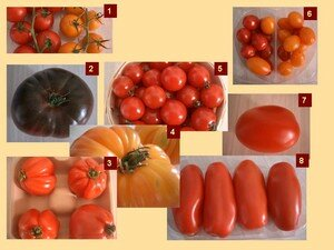 quizz_tomate