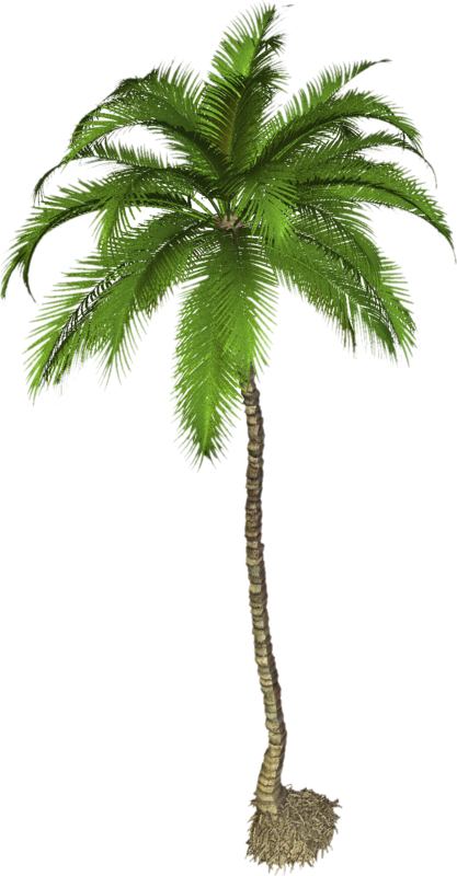 Coconut-Tree-PNG-Photo