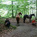 balade equestre gastronomique à La Lucerne d'Outremer (9)