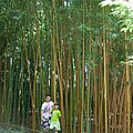 bambouseraie eeté 2013