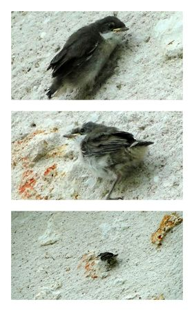 oiseaux_moineaux
