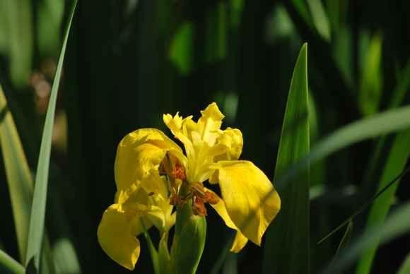 Fleur003