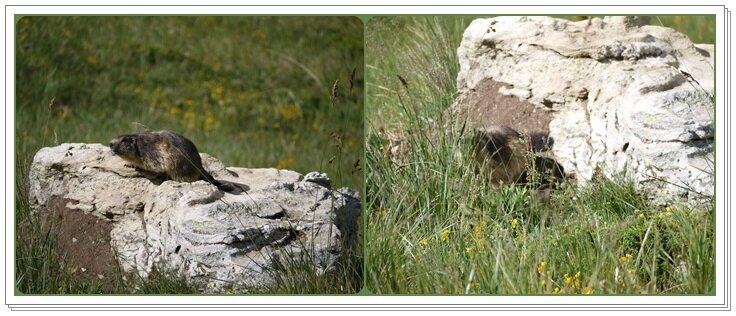 06 la marmotte